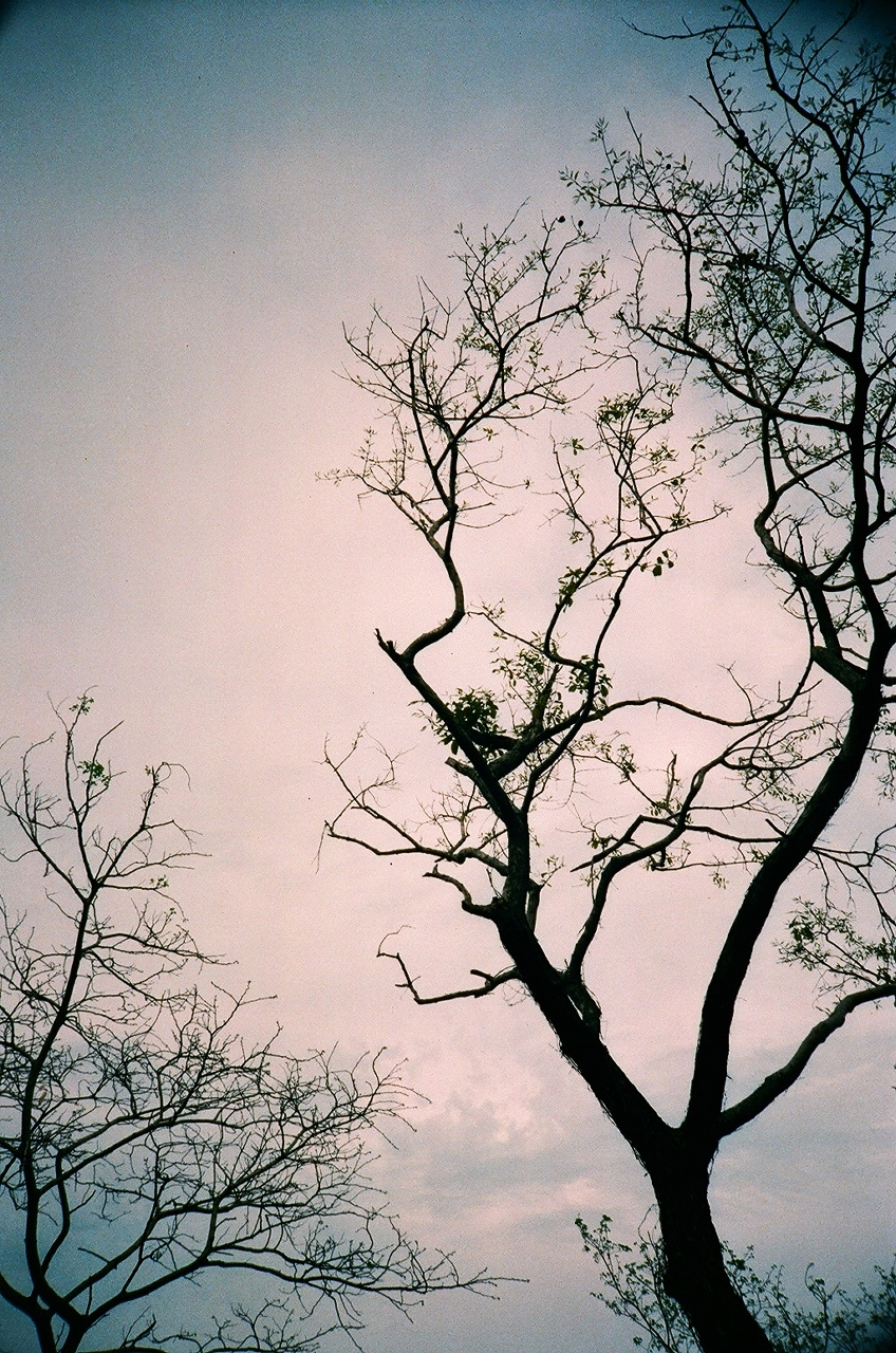 i ♥ branches