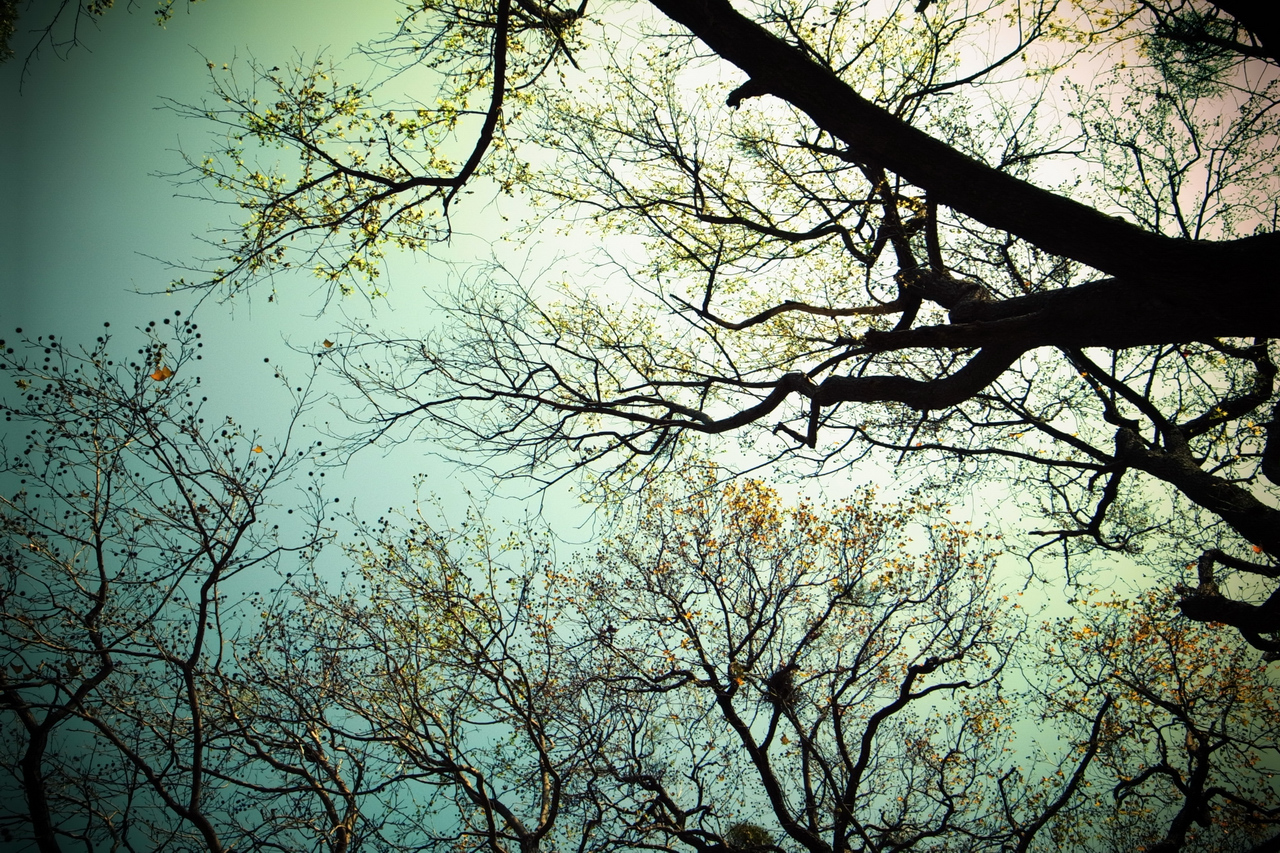 i ♥ branches.