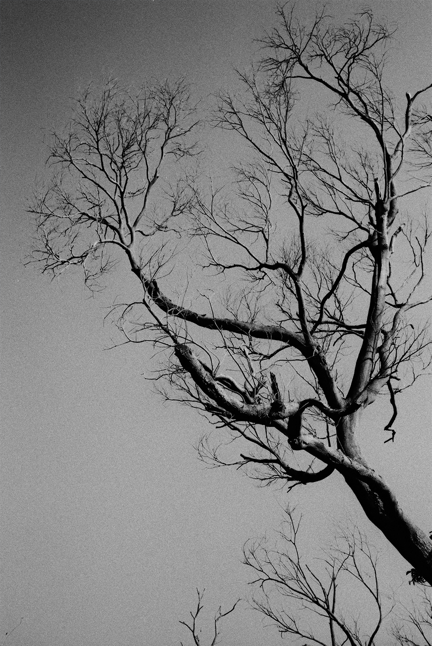 i-♥-branches